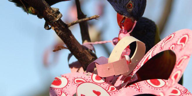 nashville zoo valentines day animal enrichment nashvillecom